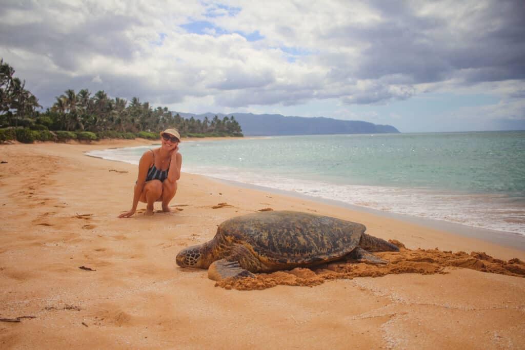Turtle beach hawaii